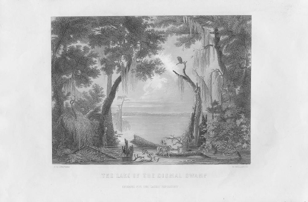 dismal_swamp.large.jpg
