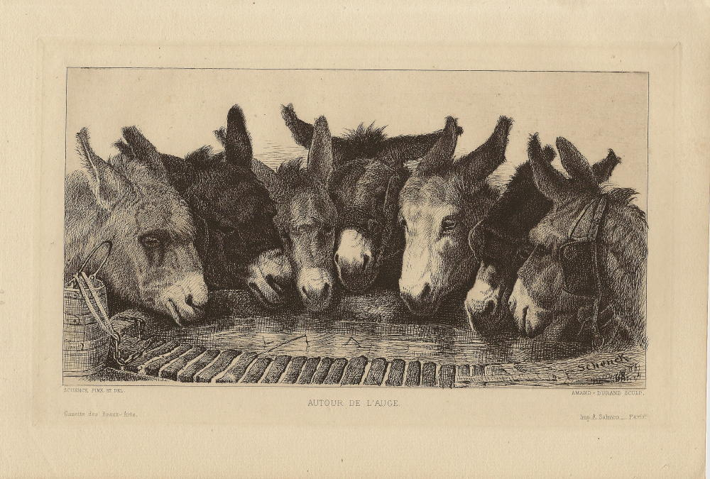 donkeys_at_well.large.jpg